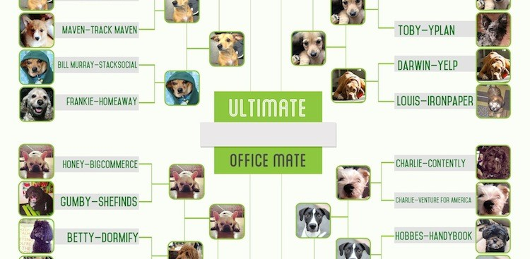 Career Guidance - The Final Four: Muse Mutt Madness 2014