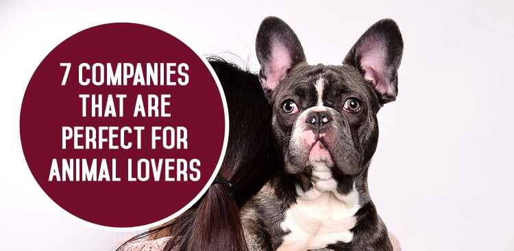Career Guidance - 7 Companies That Are Perfect for Animal Lovers