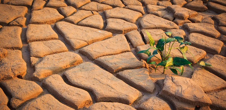 Plant growing in rocks