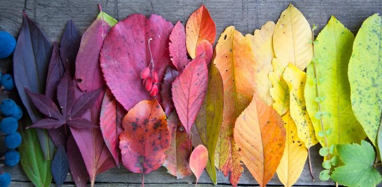 colorful leavevs