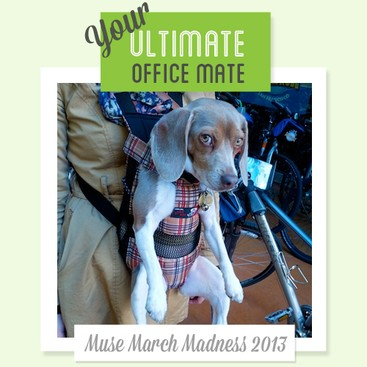 Career Guidance - 7 Career Lessons from Your Ultimate Office Mate: Lemony!