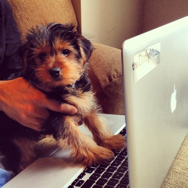 Career Guidance - 9 Reasons Why Office Dogs Make the Best Employees