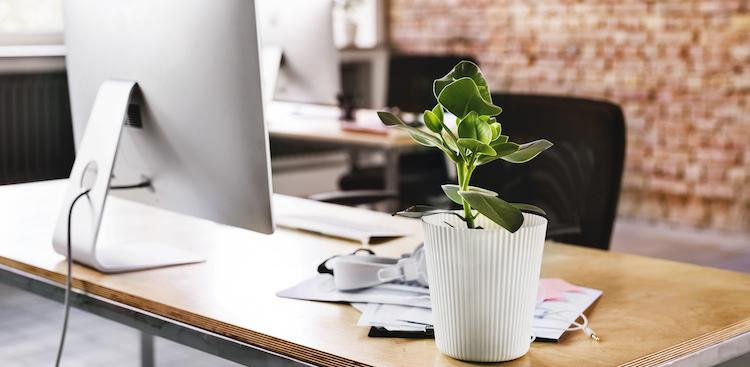a plant on a desk