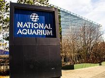Working at National Aquarium