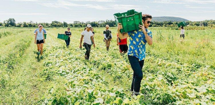 DIG employees walking through and collecting food from a farm
