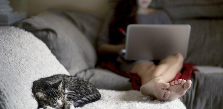 person on laptop with cat