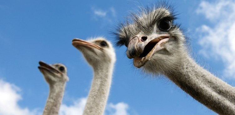 Career Guidance - Do You Have an Ostrich Problem on Your Hands?