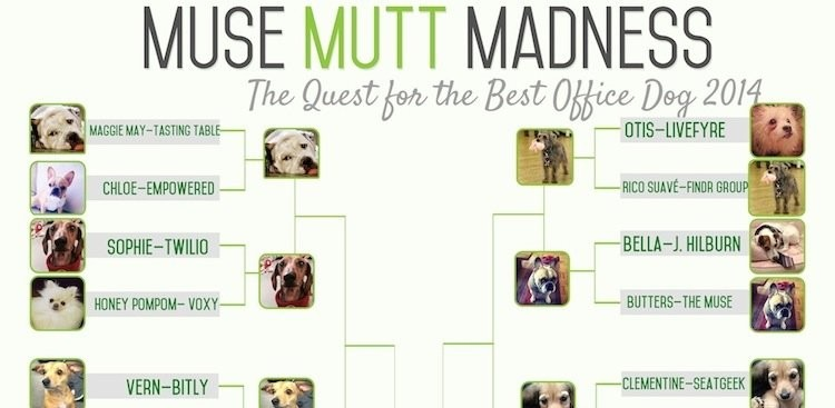 Career Guidance - Round II: Muse Mutt Madness 2014