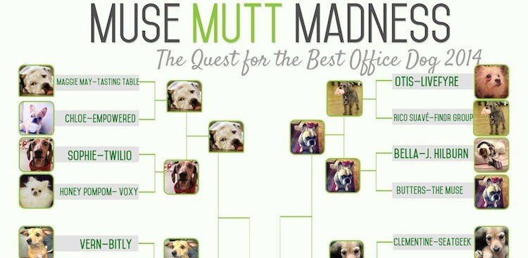 Career Guidance - Round III: Muse Mutt Madness 2014