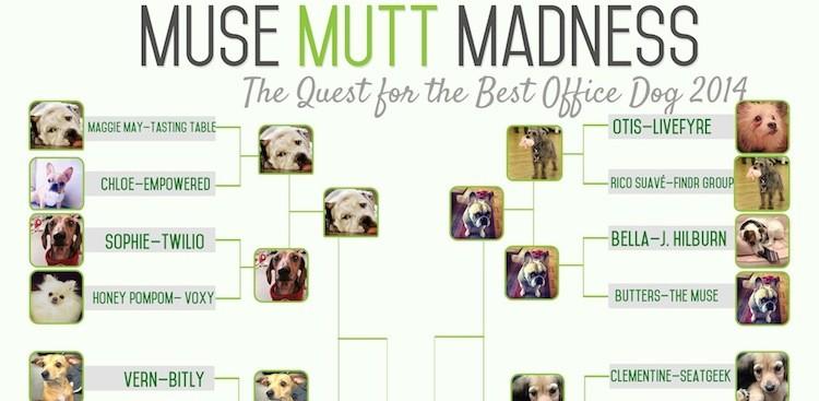 Career Guidance - Round III: Muse Mutt Madness 2014