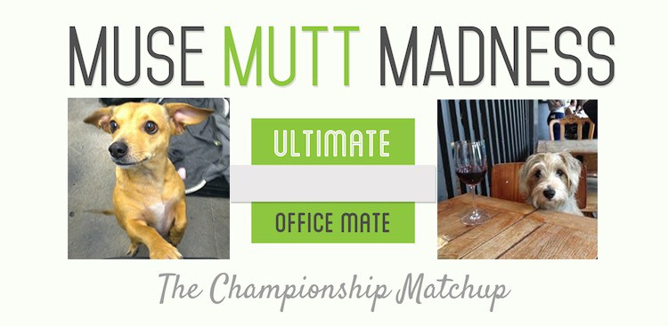 Career Guidance - The Final Round: Muse Mutt Madness 2014