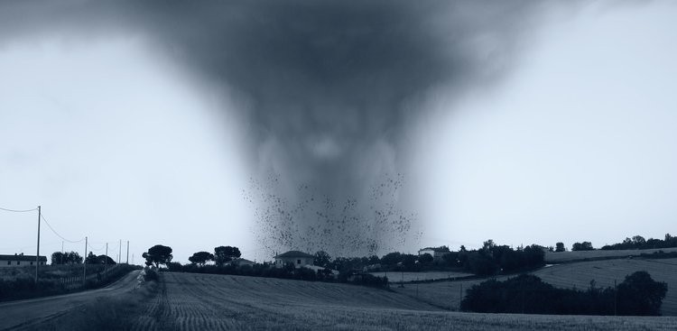 Career Guidance - Tornado Gives You Wings