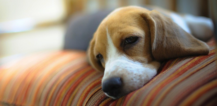 Career Guidance - 21 Animals Who Totally Get What You're Feeling Today