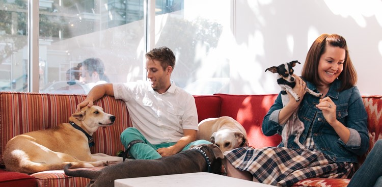 Career Guidance - How to Get Paid to Play With Dogs All Day