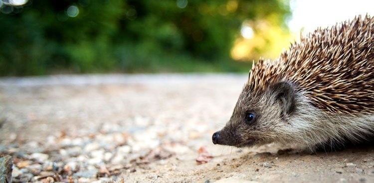 Career Guidance - What Hedgehogs Have to Do With Your Career—and 11 Other Things to Know Now