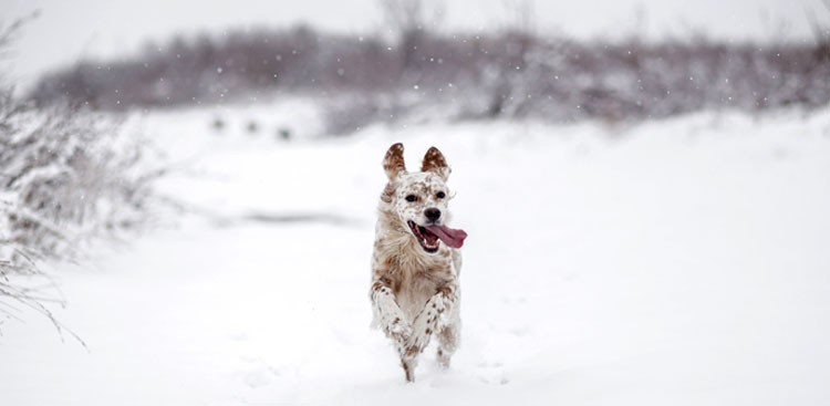 Animals in Snow GIFs - The Muse