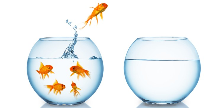 Goldfish jumping out of bowl