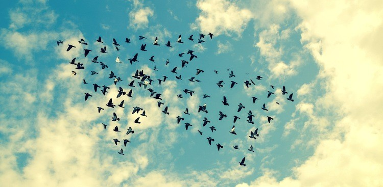 birds flying in an arrow