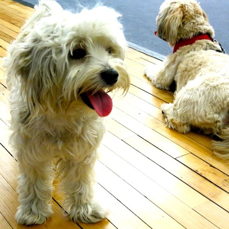 The Cutest Office Dogs Ever