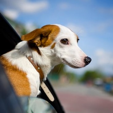 Career Guidance - Dog-Friendly Travel: How to Jet-Set With Your Pet