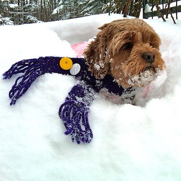 Career Guidance - 10 Animals Who Are Better at Winter Than You