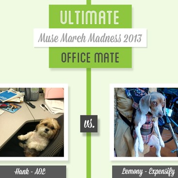 Career Guidance - Muse March Madness 2013: Hank vs. Lemony