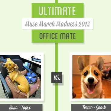 Career Guidance - Muse March Madness 2013: Kona vs. Teemo