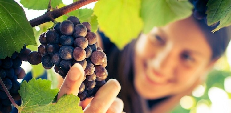 Career Guidance - What it's Like to be a Winemaker: A Q&A With Helen Keplinger