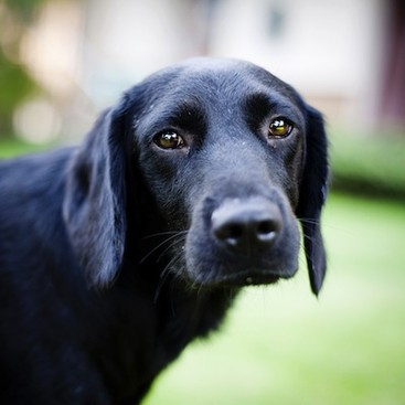 Career Guidance - 7 Dogs Who Understand How You Feel About Mondays