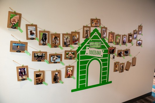 Panorama Education Company Image