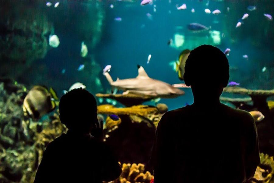 National Aquarium company profile