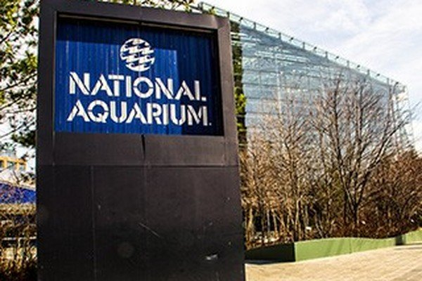Working at National Aquarium