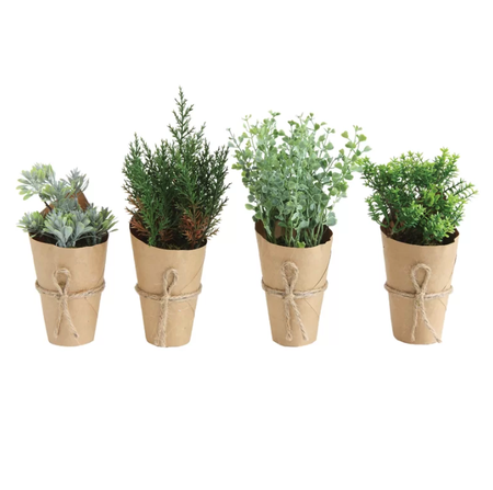 gift for business mentor: indoor mini plant set